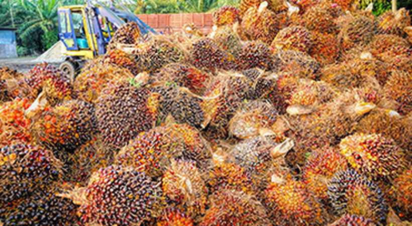Indonesia delays B40 biodiesel due to coronavirus