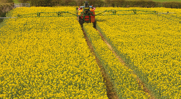 Global rapeseed area to increase slightly