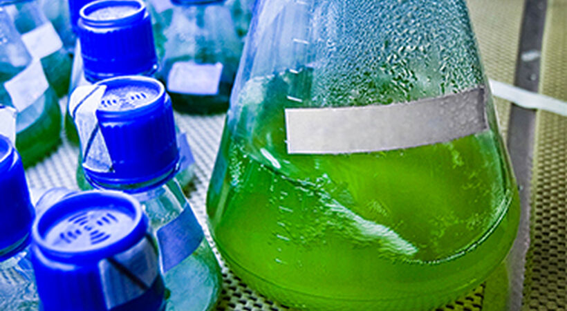 Exxon Mobile and Synthetic Genomics extend algae biofuels research