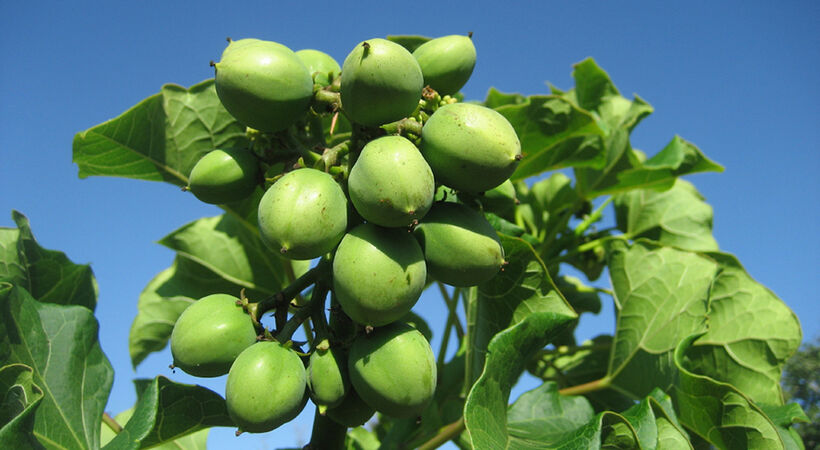 Indian government approves closure of two jatropha joint ventures