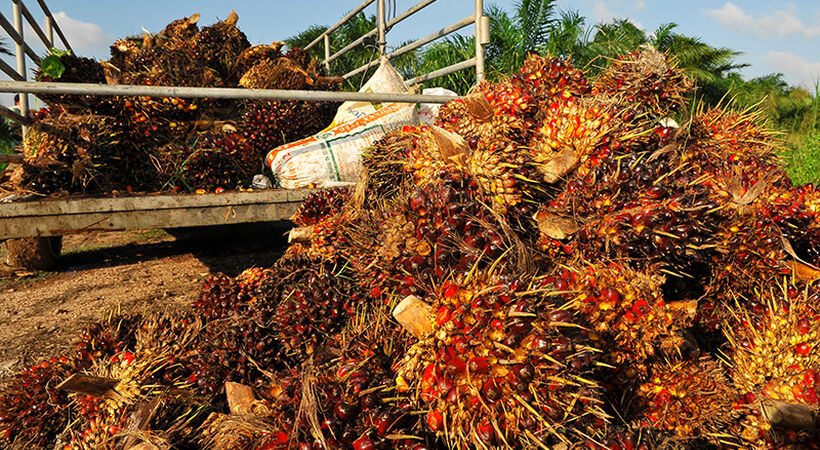 Enzymes in palm oil production