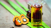High oleic palm oil