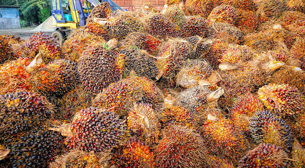 India's palm oil demand not expected to recover until first quarter 2021
