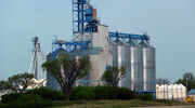Glencore Agriculture to rebrand as Viterra