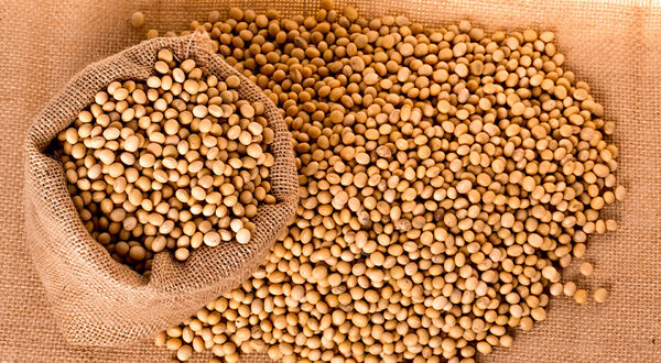 Brazil postpones import duties on soyabeans, meal and oil