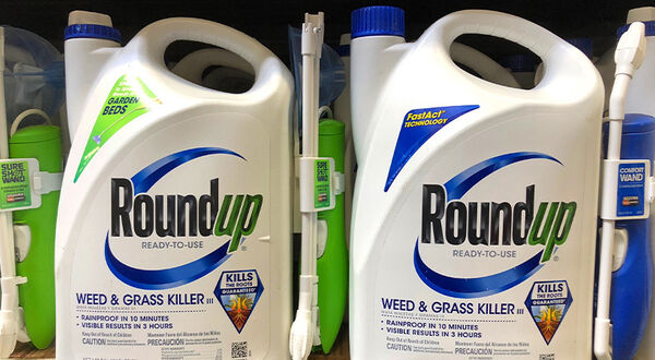 Bayer will not appeal first Roundup weedkiller verdict to US Supreme Court
